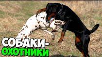 Embedded thumbnail for 7 охотничьих пород собак